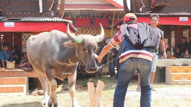 DSCF4741_Fotor_Toraja14
